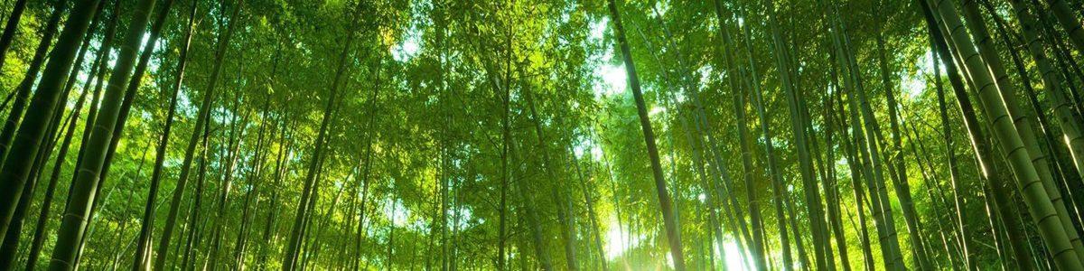 Bài thơ Tre Việt Nam - Nguyễn Duy - Bài thơ Tre Việt Nam - Nguyễn Duy - Bài thơ Tre Việt Nam - Nguyễn Duy